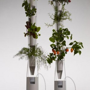 plante en appartement