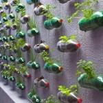 12 idées d'agriculture urbaine