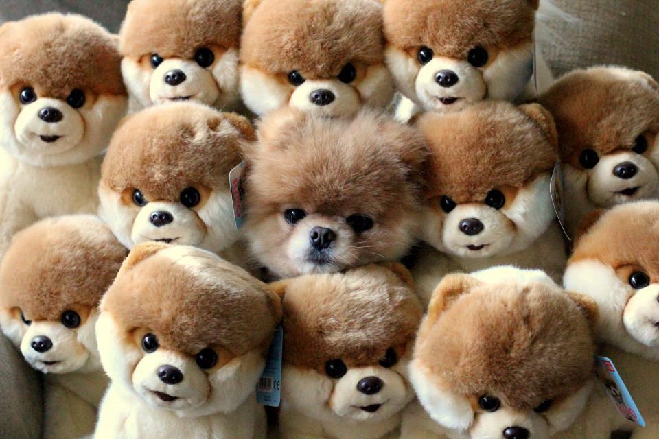 14 photos de chiens trop cute manutritionniste - Des animaux trop mignon ...
